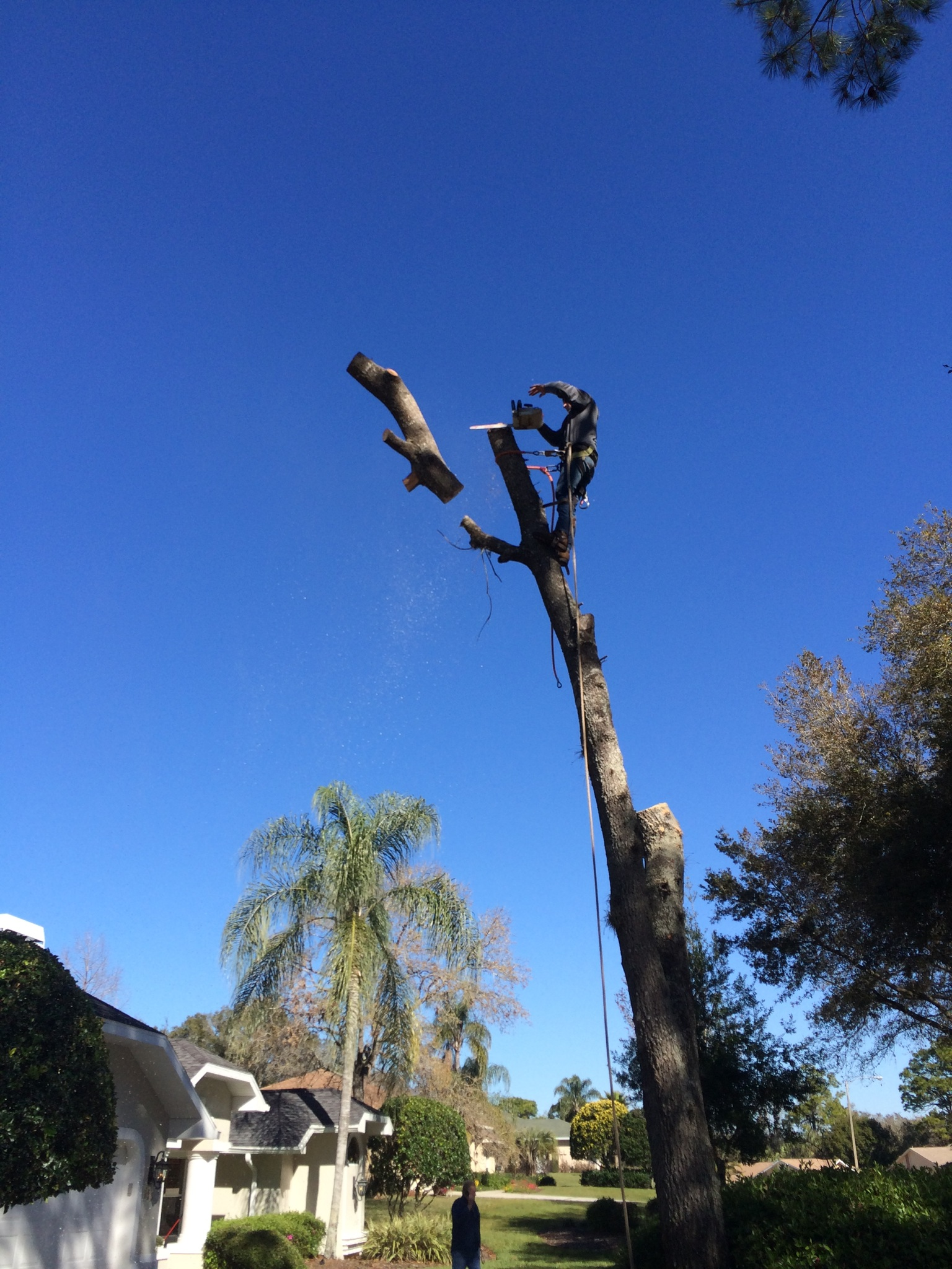 how to get a tree service license