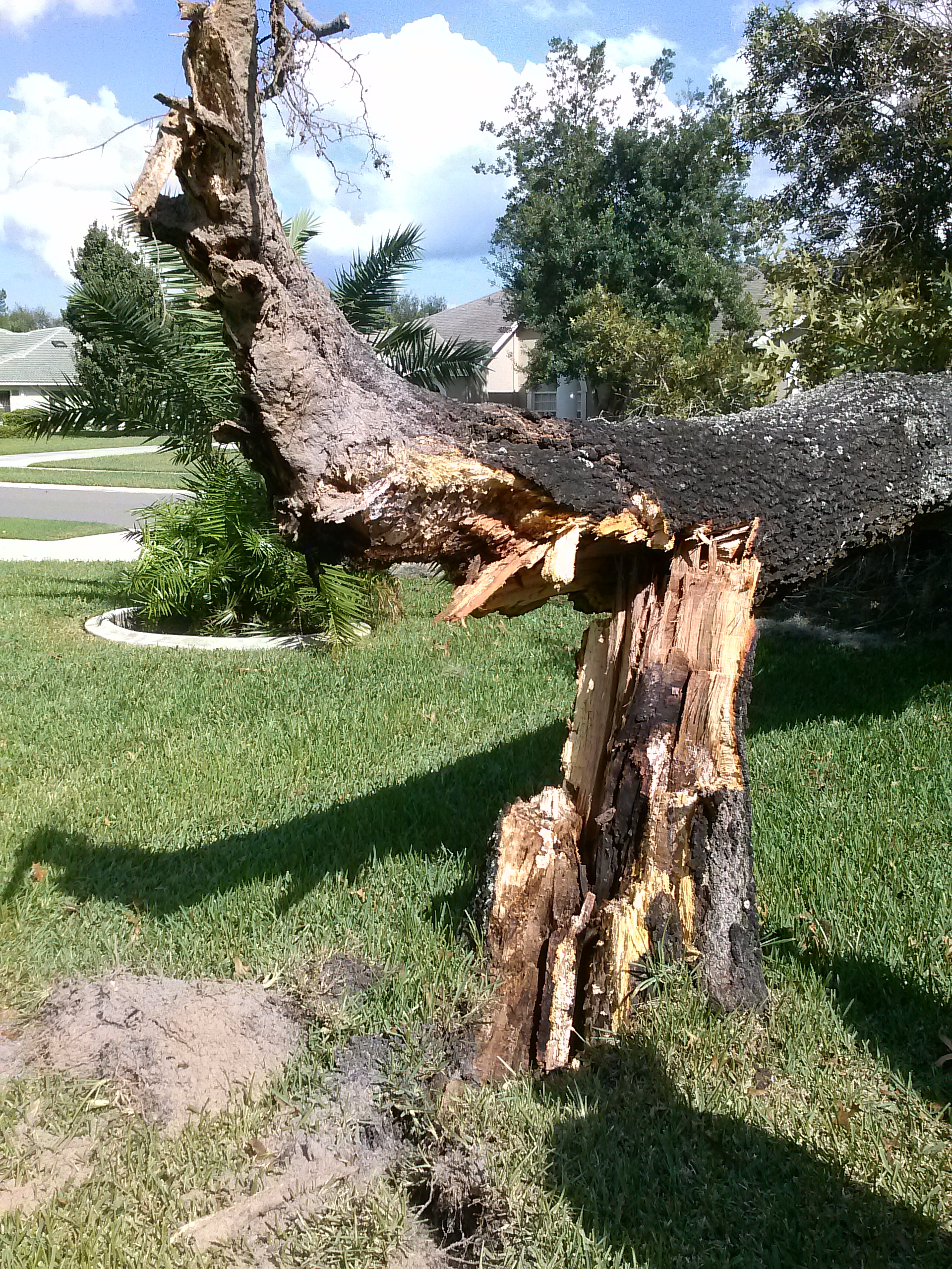 Tree Removal May Be Necessary To Preserve The Health Of Your House Many Trees Start Lifting Houses Foundation And Must Removed Ensure Structural