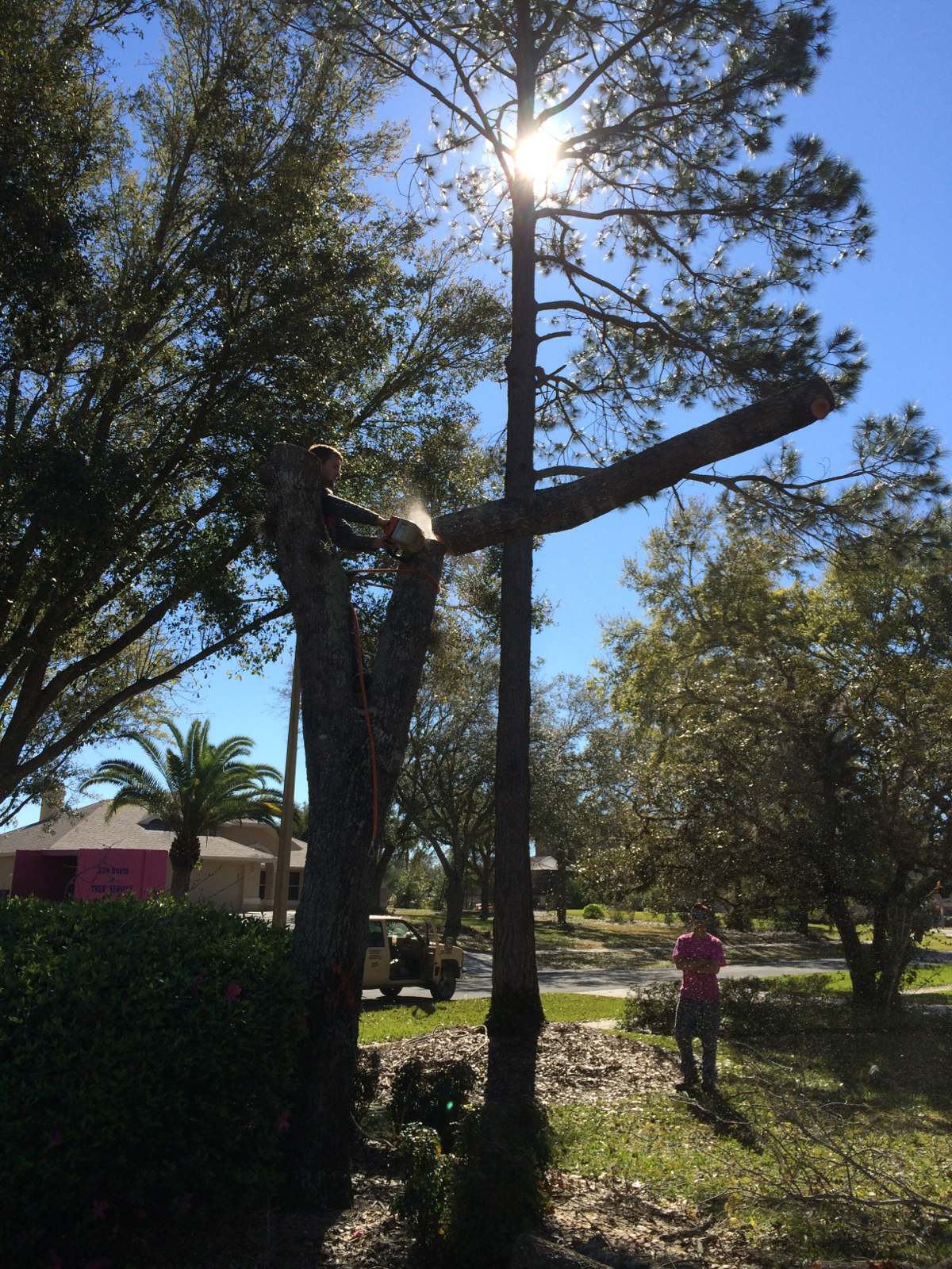 How Confident Are You In Your Tree Service